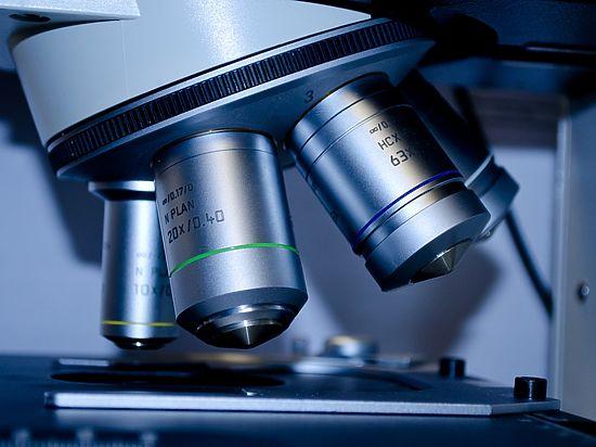Российские исследователи нашли в Тверской области неизвестный науке гриб