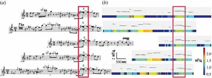 В пении флейтовых птиц обнаружены музыкальные принципы
