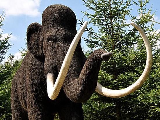 Ученые пообещали возродить мамонтов через два года