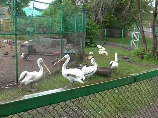 Пьяные омичи забили в зоопарке пеликана и журавля на шашлык