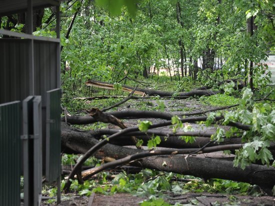 «Завалило сразу тремя деревьями»: пострадавшие от московской грозы делятся эмоциями