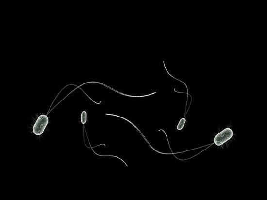 Ученые создали бактерии-киборги, пожирающие свет и производящие уксус