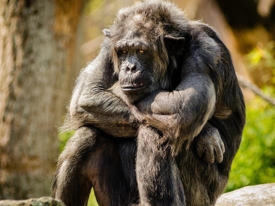 Пестициды привели к появлению безносых обезьян-мутантов в Уганде