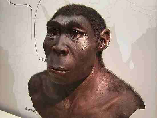 Предки людей миллион лет назад были высокими и худыми