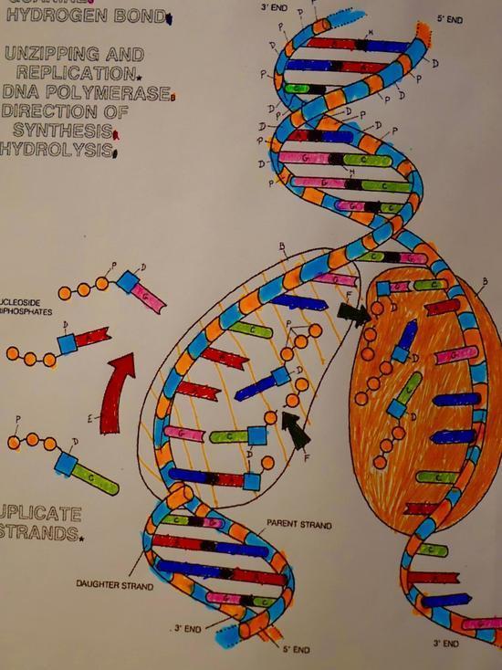 Генетики заявили, что каждый девятый россиянин — носитель опасных мутаций