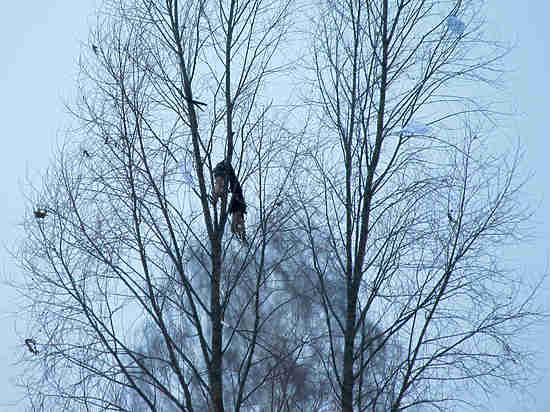 Личные вещи пассажиров Ан-148 находят даже на деревьях